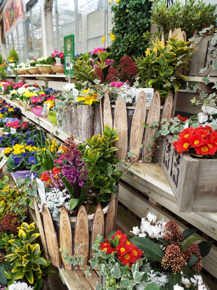 Scotsdales Garden Furniture 21 best great shelford store images on pinterest planters and pre potted containers available at scotsdales garden centre great shelford workwithnaturefo