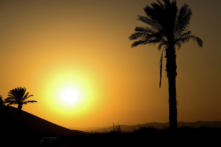 Golden Andalusian Sunset With Silhouette Palm Trees And Mountain Photograph by Anna Maloverjan  sunset, sun, mountain, palm, tree, orange, silhouette, summer, sky, travel, tropical, paradise, vacation, scenery, exotic, landscape,