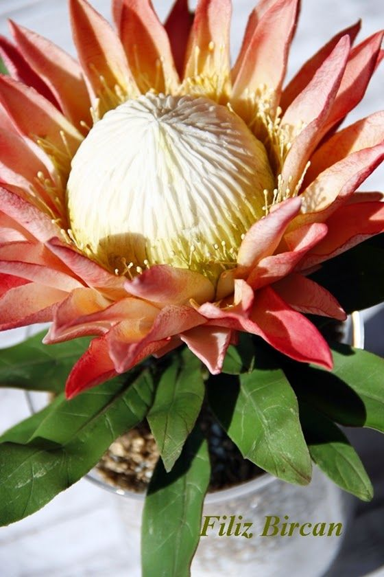 Kral Protea (King Protea) via the dauphine | Sugar Flowers ...