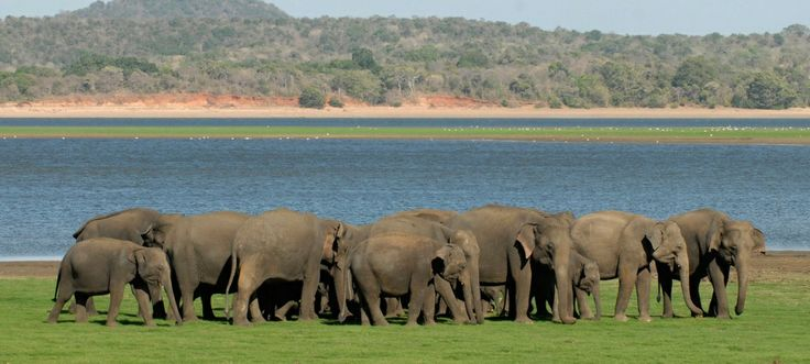 Safari at Minneriya national park, horton plains and Sinharaja   Tropical Way Tours