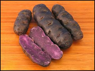 Purple peruviana
