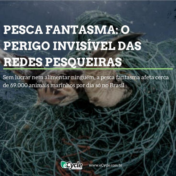 Pesca fantasma: o perigo invisível das redes de pesca   – Conteúdo