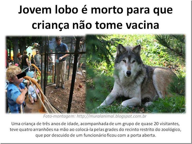 Mural Animal: Jovem lobo é morto para que criança não tome vacina