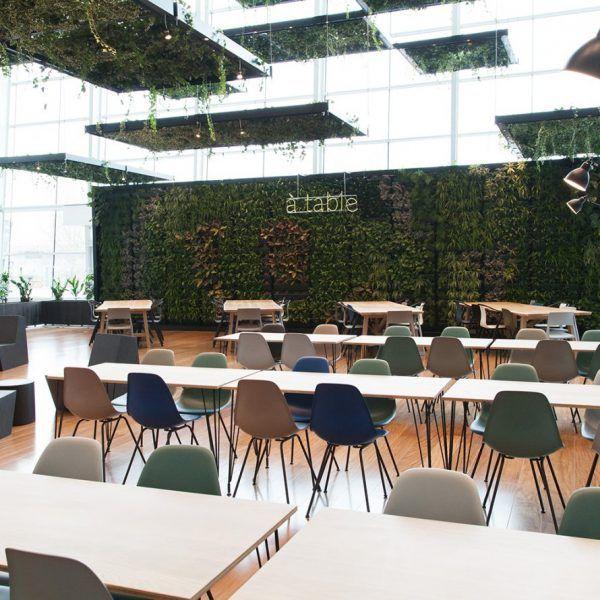 Décoration végétale pour la Cantine du centre commercial Domus.