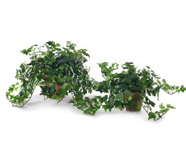 814 best plantas para interiores meia sombra e sombra for Plantas decorativas para interiores
