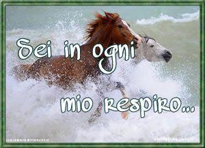 cavallo marrone e cavallo bianco nell'acqua al galoppo