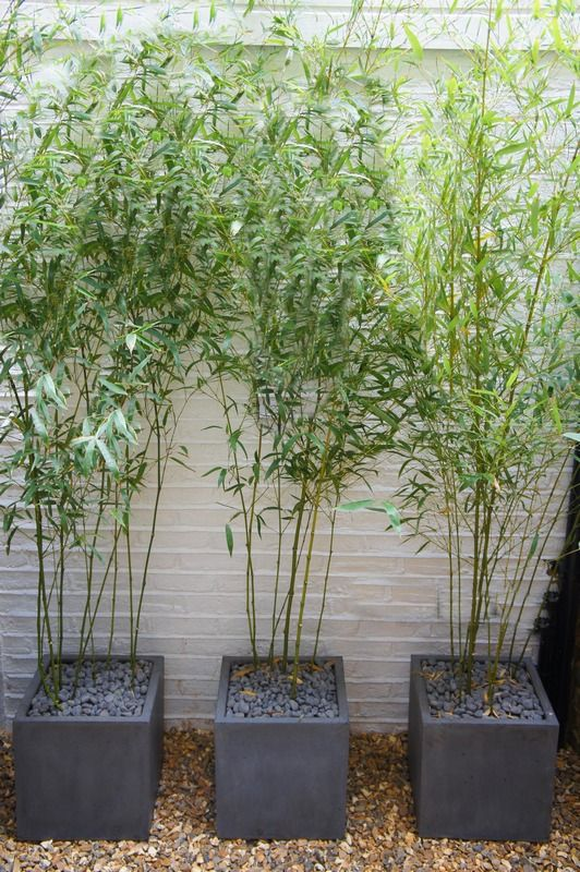 Bamboo.planters for garage wall. make pots from concrete pavers. pinch bamboo from mum's garden.