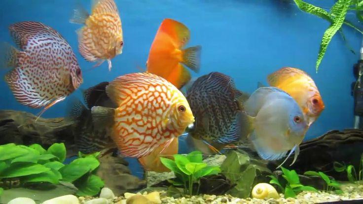 Румыния-Констанца-аквариум
