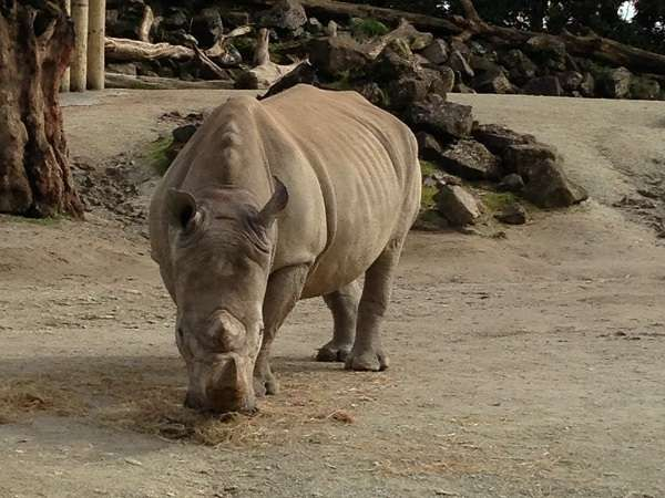 My latest post that is just a few pictures of the animals at Auckland zoo. #Auckland #zoo #NewZealand #HomelessNomad