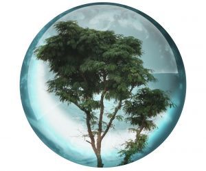 Biodiversité et développement durable - http://www.mission-economie-biodiversite.com
