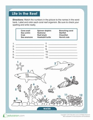 Fourth Grade Life Science Worksheets: Coral Reef Animals and Plants