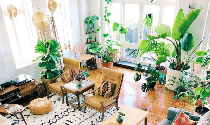 piante da interno design - Cerca con Google   Salotti ...