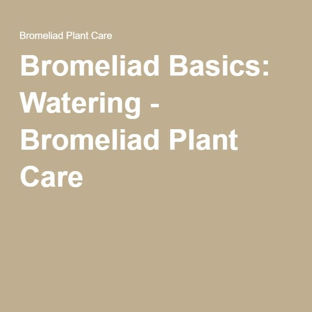 109 best images about gardening bromeliads on pinterest - How often to water vegetable garden ...