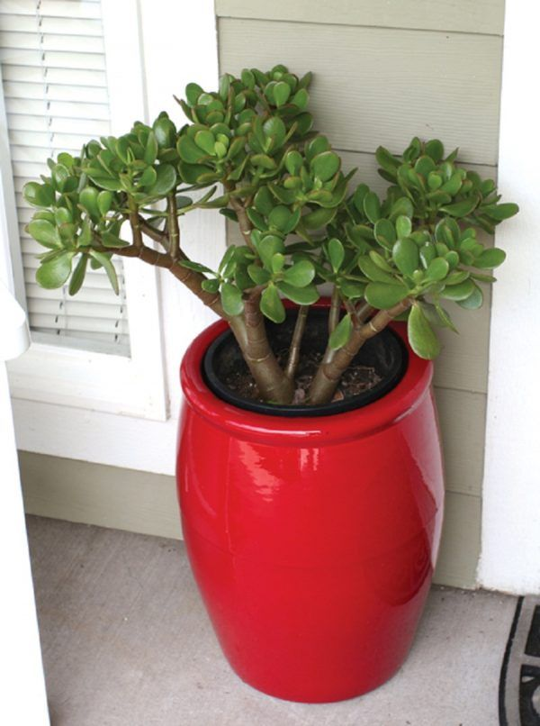 8 Secrets Of Inviting Positive Energy By Using Feng Shui Plants For Front Door Tnc Landscape In 2020 Jade Plants Feng Shui Plants Feng Shui House #plants #feng #shui #living #room