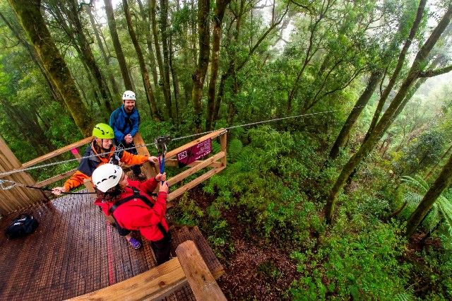 Rotorua Canopy Tours        This 3 hour adventure is the only native forest zipline canopy tour in New Zealand and was ranked the number one activity out of 654 activities in the North Island on Trip Advisor This is an unforgettable eco tourism adventure catering to small groups, accompanied by highly trained and knowledgeable guides who will escort you high amongst ancient trees in the 500 hectare forest, combining fun and excitement in this pristine natural environment.