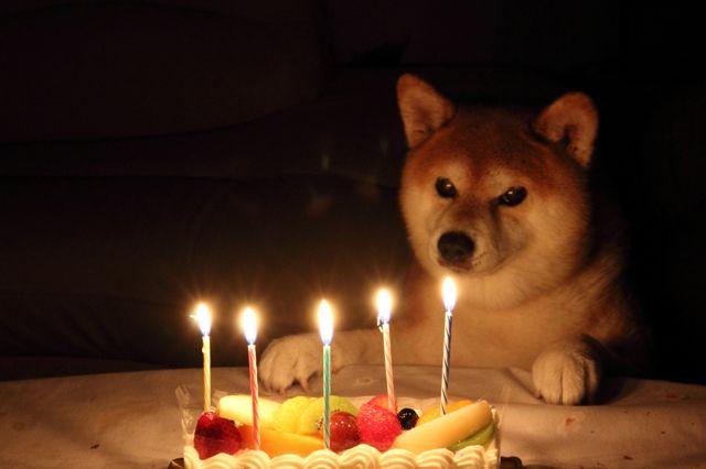 CANON(キヤノン)のカメラ Canon EOS Kiss X5で撮影した動物(Happy birthay! 11(ワンワン))の写真(画像)