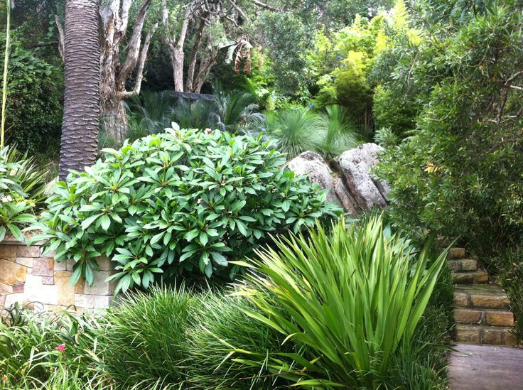 Through blending a variety of foliage forms and colours from a palette of native and exotic plants you can create the themed style of garden you most enjoy spending time in. Here Gymea Lillies and Franjipannis invite you to meander up the garden path to sit in the shade of this tropical styled garden.