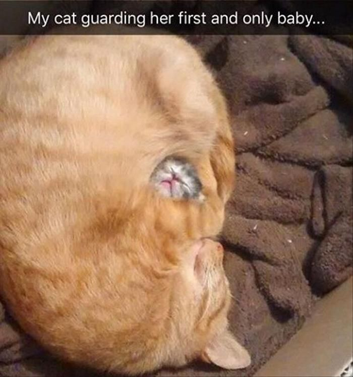 Funny Animal Pics Of The Day – Wackyy Picdump 16 (55 Photos)