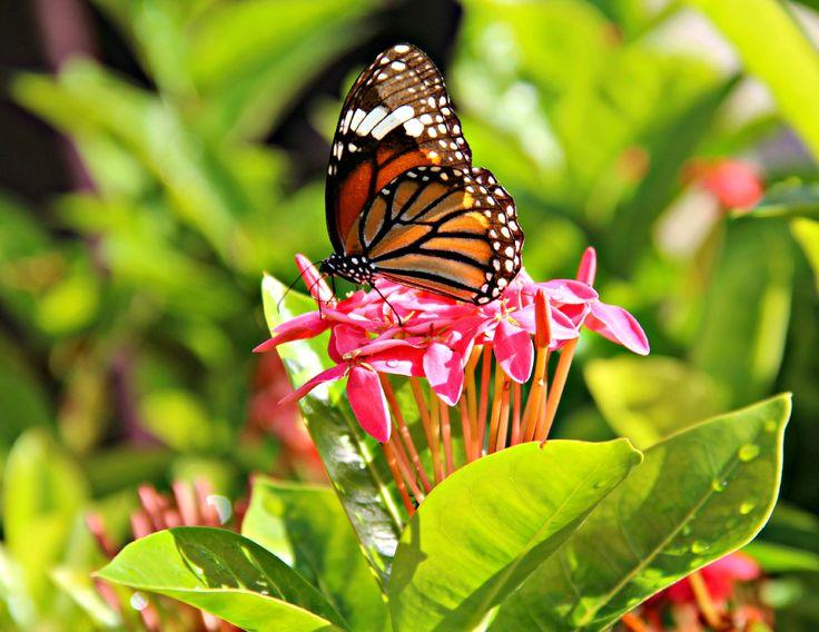 Butterfly Photographer: Shelley Wilton