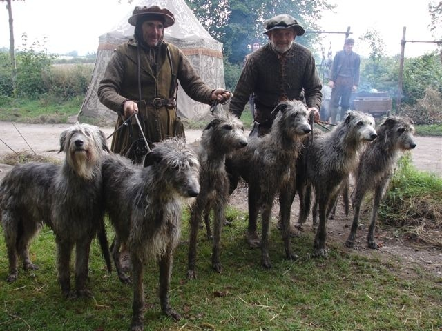 """The Deerhound was bred to hunt red deer by """"coursing"""", and also """"deer-stalking"""" until the end of the 19th century"""