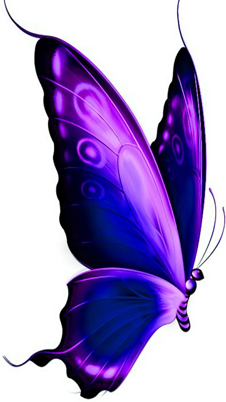 522 Best Butterflies Images On Pinterest Butterflies