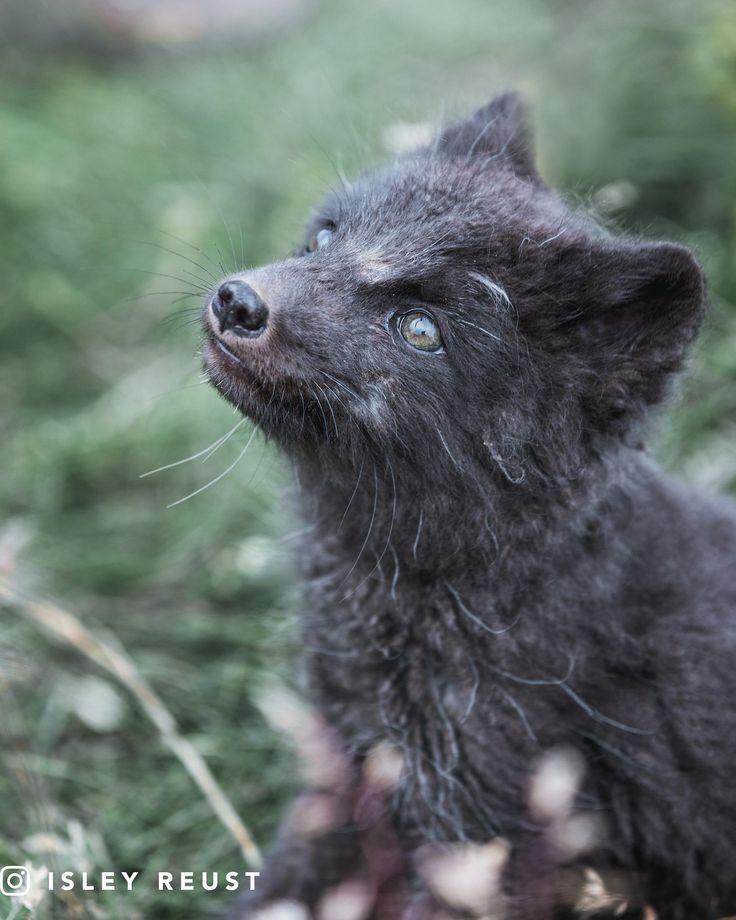 how to use arctic fox vape