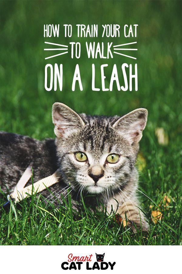 Wie trainiere ich meine Katze an der Leine? Katzen können mit Geschirr oder Leine laufen …   – Cats Funny