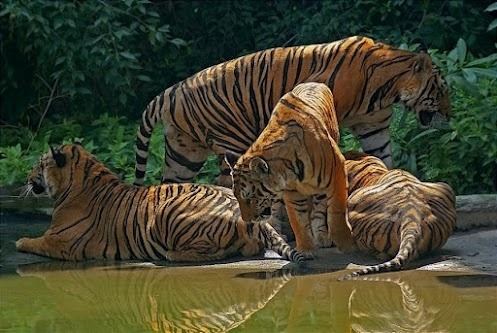 Солнечное утро... ( Sunny morning ...)  #EarthMyMother #ForFriends #photo: Big Cat, Wild Cat, Animal Misc, Animal World, Beautiful Animal, Cat Pics, Los Animal, Mr. Big, European Animal