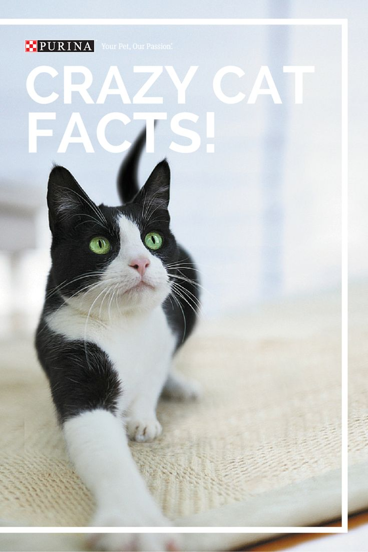 Ever wonder why cats meow? Considering getting a cat water fountain but don't understand why they are so popular? Check out this article for some interesting cat facts!