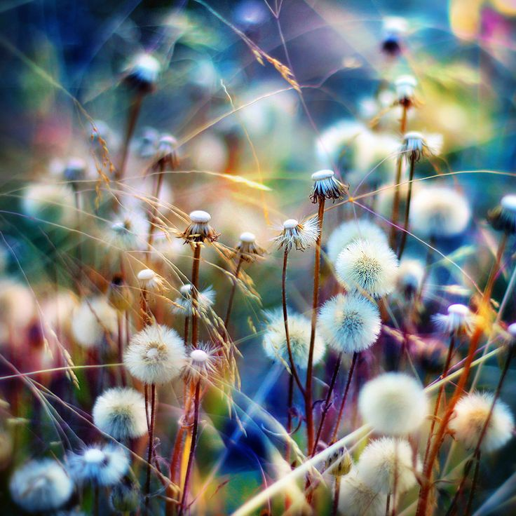 I can't believe I'm saying that I LOVE this artsy twist on dandelions, So pretty!!!