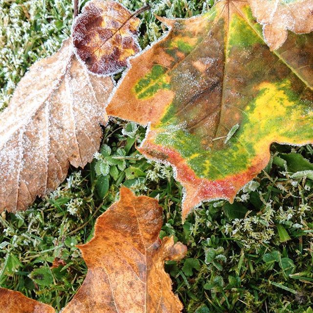The trees are heading for their winter-sleep, leaving frosty autumn leaves on the ground. Close to the nature when working at Stora Enso.