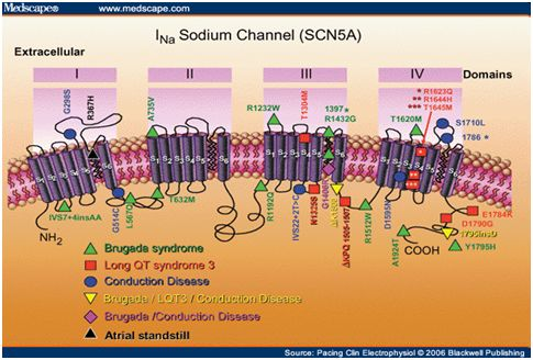 Gene Expression Techniques
