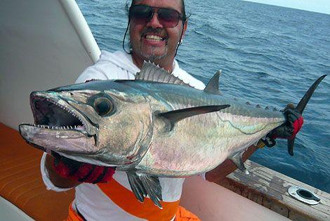 Dog Tooth Tuna