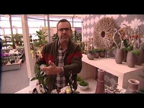 Hoe maak ik een bloemstuk met weinig bloemen? - YouTube