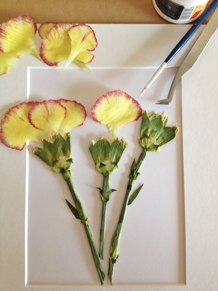 Create a pressed flower picture.