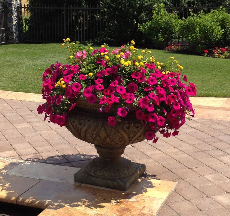 Summer container garden magenta petunias hot pink