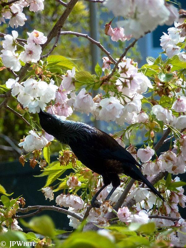 Tui Blossoms