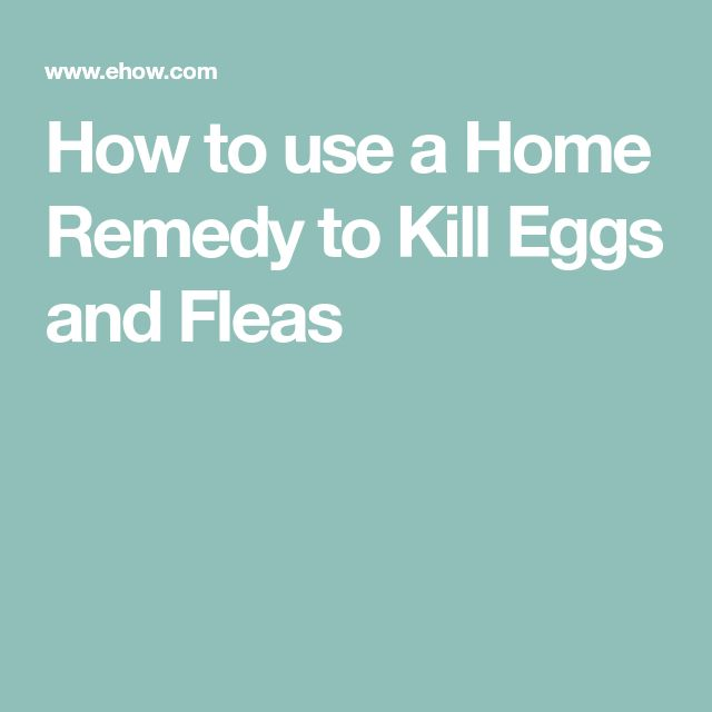 How to use a Home Remedy to Kill Eggs and Fleas