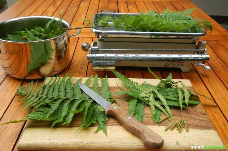 16 Natürliche Mittel gegen Blattläuse, Schildläuse, Schmierläuse, Wollläuse und…