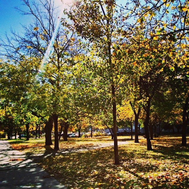 Fall morning :) #fall #sun #autumn #love #beautiful #sunny #leaves #sunup #snapshot #trees #nature #today #byme #landscape #follow4follow #followforfollowback #followmeplease