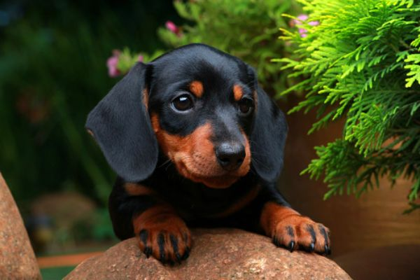50 Cute Puppies You Ll Have To See To Believe Dogs Small