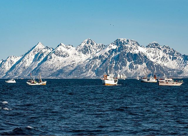 Just one more of the recovered photo from my trip to Lofoten. After 10 years, the damaged memory card was finally recovered.  Being in the World Championship in Cod Fishing was an amazing experience. Beautiful nature and the weather was perfect, you can't ask for more! #dreamchasersnorway #norway2day #vibrantnorway #ourwayisnorway #visitnorway #pocket_norway #iamnordic #unlimitedscandinavia #norgefoto #norway #archipelago #nature #nortrip #nikond1 #worldchampionshipcodfishing