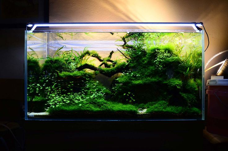 Green Aquarium Decoration Ideas ~ http://www.lookmyhomes.com/creative-aquarium-decoration-ideas/
