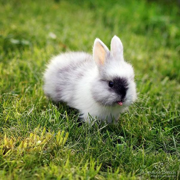 It's Friday! The perfect day for a bunny