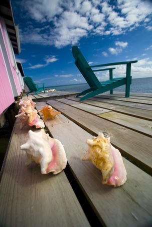 awesome pics: Belize Image Spanish Lookout Caye, Belize City Conch shells on porch, Spanish Lookout Caye.