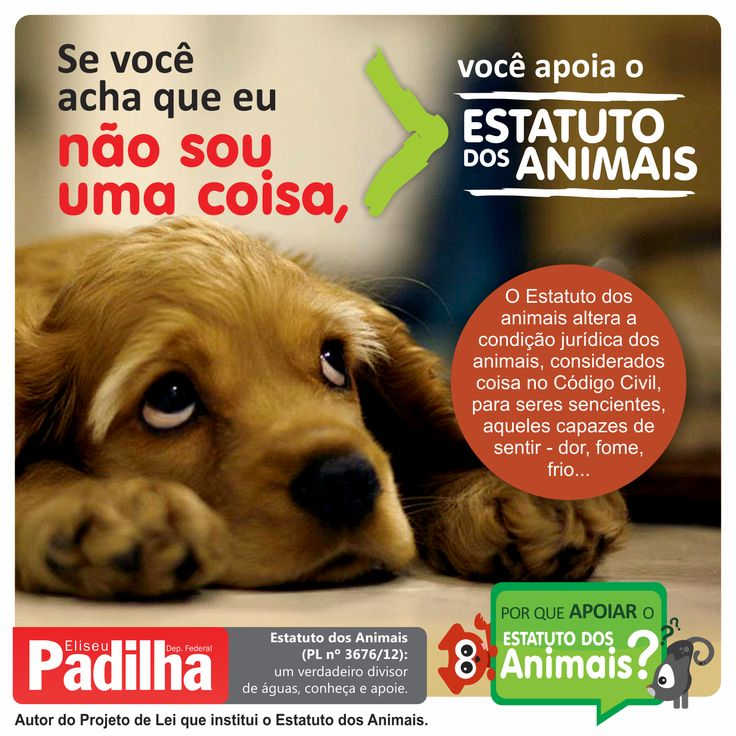 #EliseuPadilha PL3676/2012 #Estatutodosanimais #issomudaojogo