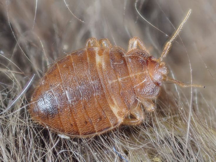 Image result for Best Hudson County Bed Bugs Removal Services istock