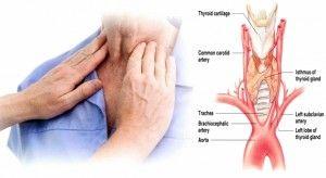 Cara Efektif Atasi Gangguan Tiroid Dengan Obat Tradisional Kelenjar Tiroid Manjur Dari Ace Maxs