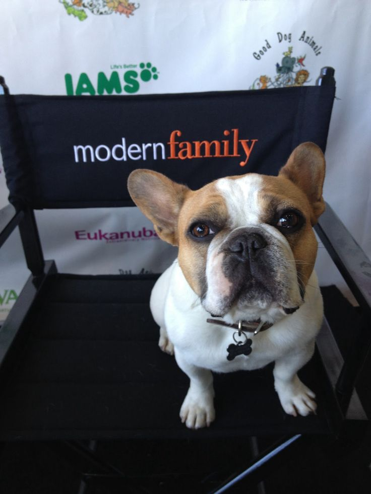 617 best Modern Family images on Pinterest | Tv quotes, Modern ...