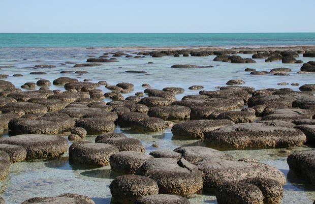 stromatolit pada pembahasan Teori Asal Usul Kehidupan